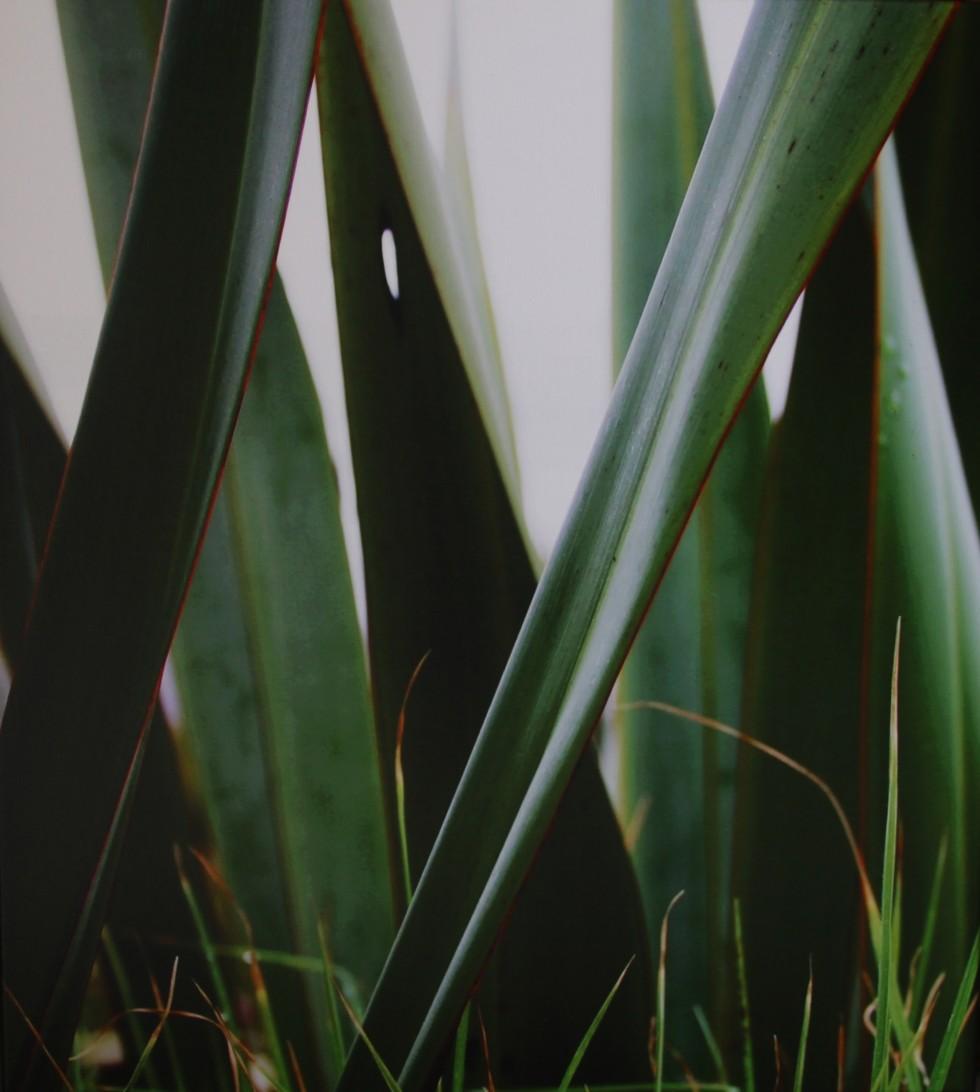 Flax | $320 | Canvas Print
