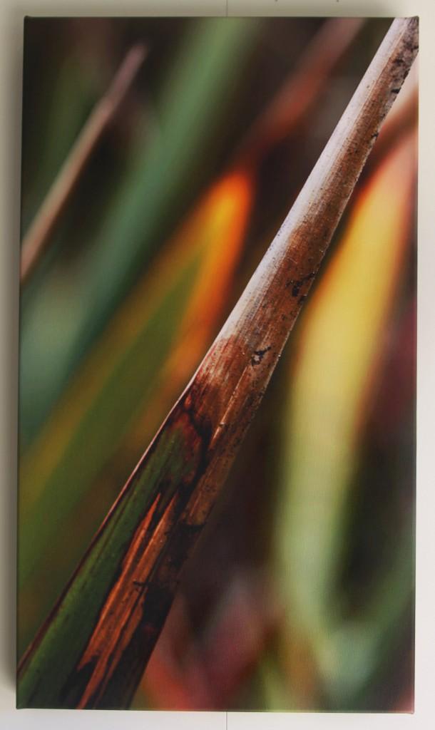 Autumn Flax